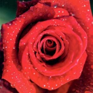 Blanco wenskaart zonder tekst van 17 bij 17 centimeter met een bloemmotief