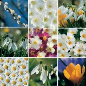Blanco wenskaart zonder tekst van 17 bij 17 centimeter met een passe-partout van witte en gele bloemen