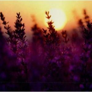 Blanco vierkant kaartje met een mooie zonsondergang