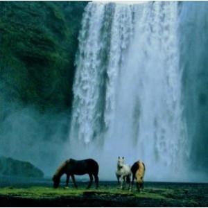 Blanco vierkant kaartje met paarden bij een waterval