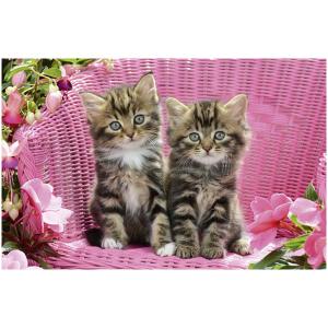 Wenskaart foto mini met 2 poesjes op een roze rieten stoel