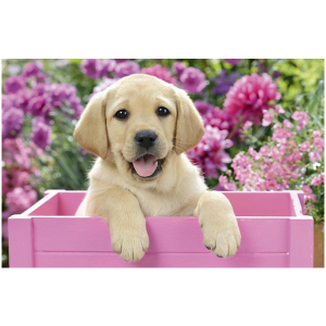 Wenskaart foto mini met een hondje in een roze houten bak