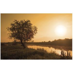 Wenskaart foto mini met een boom aan de waterkant