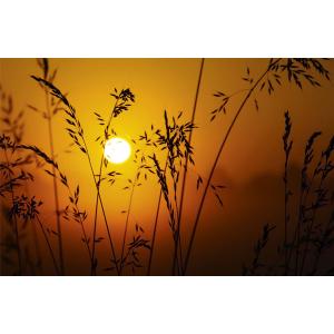 Wenskaart foto mini zon tussen grashalmen