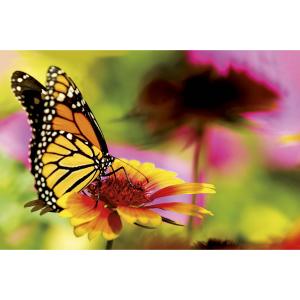 Wenskaart foto mini met de afbeelding van een vlinder op een bloem